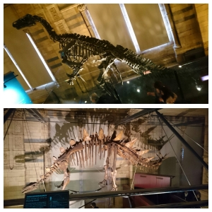 Dinosaur exhibit - The Natural History Museum, London.