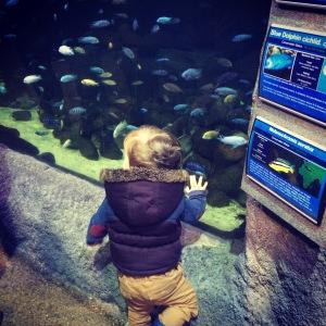 Oliver at the aquarium.