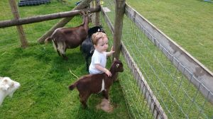 Oliver and his favourite pygmy goat.
