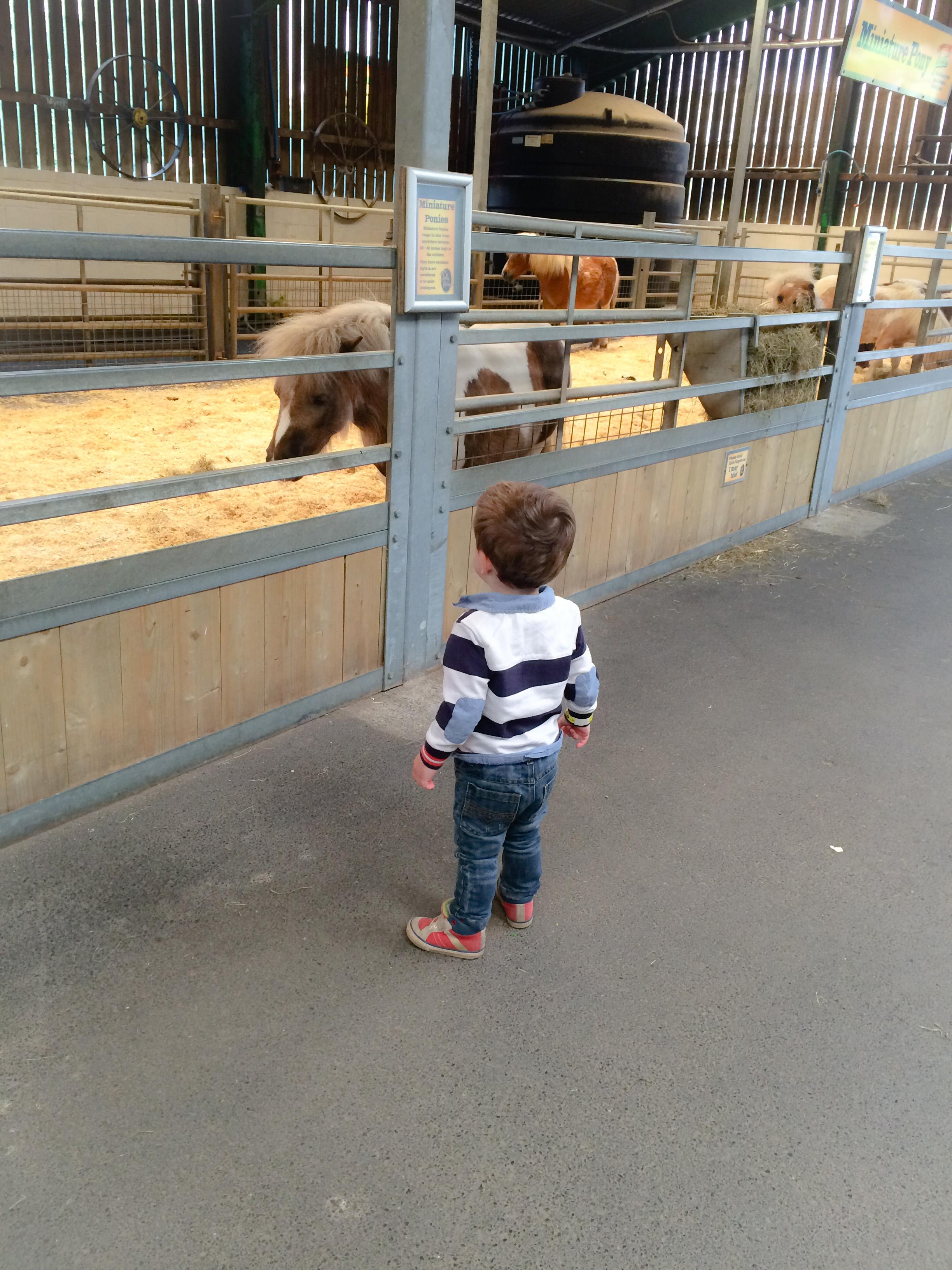 Blustone Wales - Foly Farm