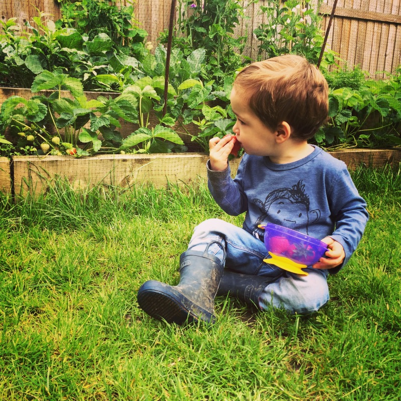 Grow your own fruit and veg with children