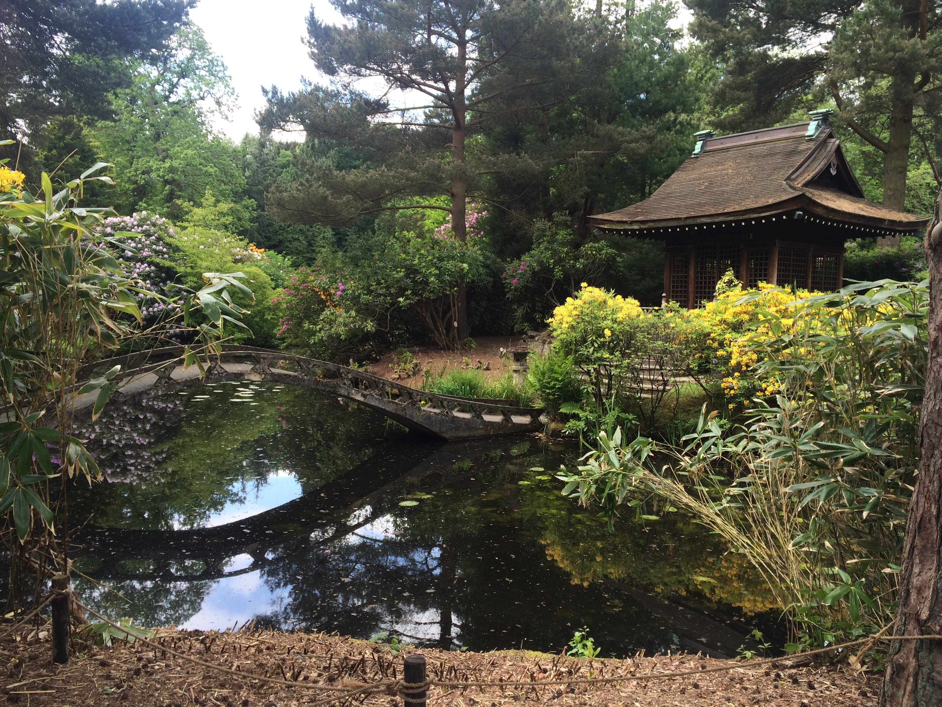 The Japanese garden - Tatton Park