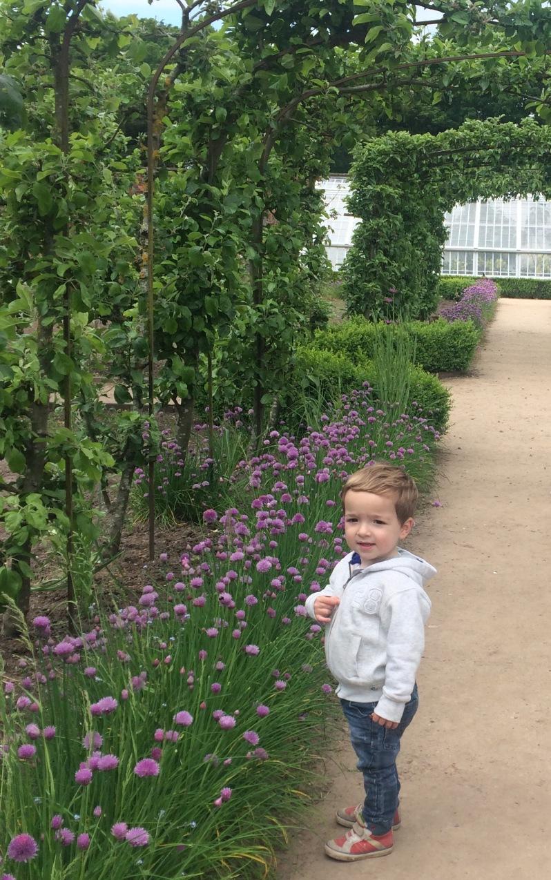 The kitchen garden - Tatton Park