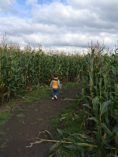 Farmyard fun maize maze