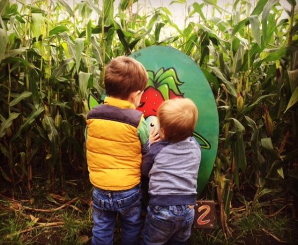 Farmyard fun maize maze