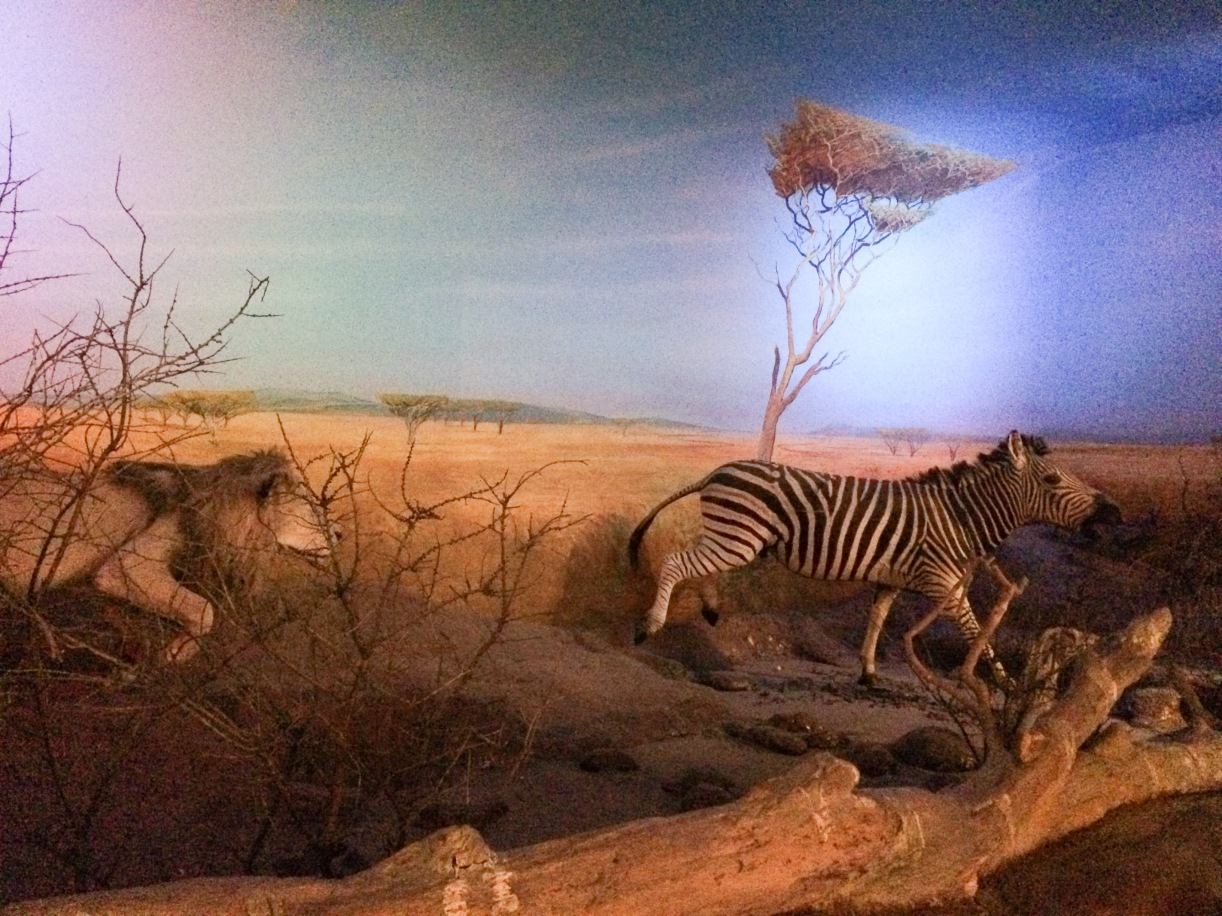 Natural World Museum - Liverpool